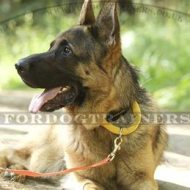 Best German Shepherd Dog Collar with Handle for K9 & Daily Use