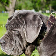 Blue Neapolitan Mastiff Dog Leather Collar with Plates