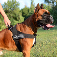 Boxer Harness Nylon UK | Non Pull Dog Harness for Boxer