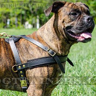 Leather Dog Pulling Harness for Boxer Dogs
