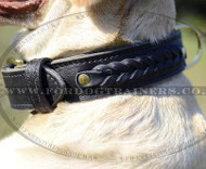 Braided Leather Dog Collar for Labrador | 2 Ply Leather Collar
