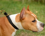 New Braided Leather Choke Collar for Staffordshire Bull Terrier