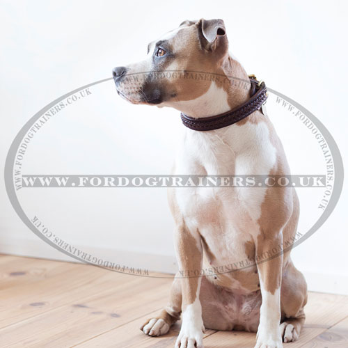 Amstaff Braided Leather Dog Collar