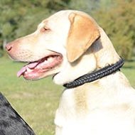 Braided Leather Dog Collar for Labrador | Braided Dog Collar