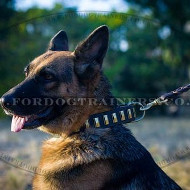 New German Shepherd Collar with Brass Plates