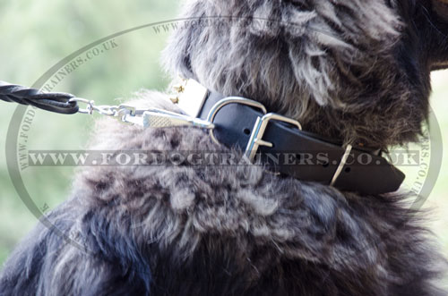 quality soft leather dog collar  for Caucasian Shepherd