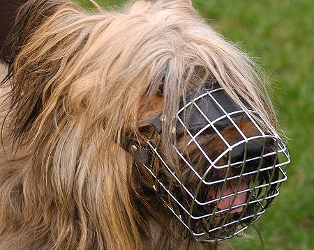 Wire dog muzzle for Briard