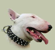 English Bull Terrier Collar UK | 3 Rows Spiked Dog Collar