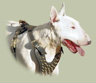 Bull Terrier Harness with Brass Spikes | Luxury Dog Harness