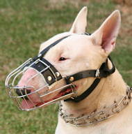 Bull Terrier Muzzle Wire Basket | Bestseller Dog Muzzle UK