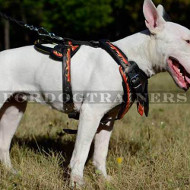 "English Bull Terrier Dog Harness ""Flame"" Design"
