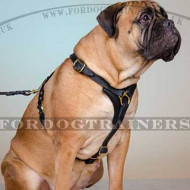 Bullmastiff Harness Handmade of Leather | Dog Harness for Sale