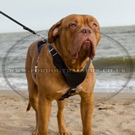 Dogue De Bordeaux Leather Harness for Big Dogs