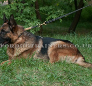 The Best Dog Leash for German Shepherd Made of Leather and Brass