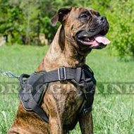 Simply Perfect Boxer Harness with Padded Chest Plate and Handle