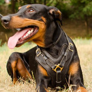 The Best Doberman Harness Choice, Padded Leather Y-Shaped Chest
