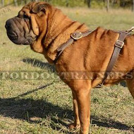 Chinese Shar Pei Luxury Leather Dog Harness, Hand Made
