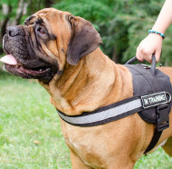 High Vis Dog Harness for Bullmastiff Sport, Service, Walking
