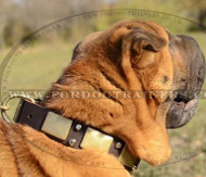 Decorated Leather Dog Collar for Shar Pei Online