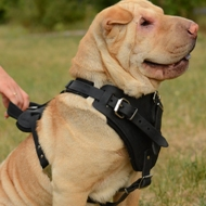 Shar Pei Harness for Sale | Shar Pei Training Harness