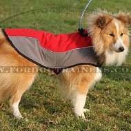 The Best Dog Harness for Sheltie | Shetland Sheepdog Jacket