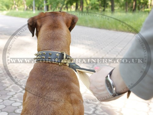 Walking Dog Lead Handle