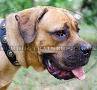 Cane Corso Collar with Medals | Nylon Dog Collar for Cane Corso