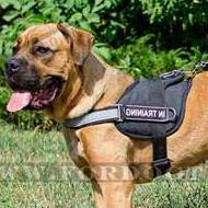 Cane Corso Mastiff Dog Harness with Patches and Reflexive Strap