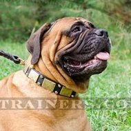 Smart and Strong Bullmastiff Dog Collar for Big Dogs