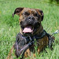 Boxer Dog Training Harness will Help Control Your Strong Beast!
