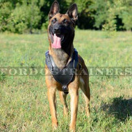 Padded Dog Leather Harness for Belgian Malinois Training