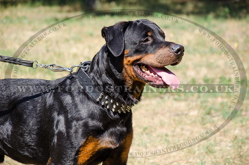 Spiked Dog Collars For Rottweilers