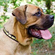 Collars for Dogs Elegant Look for Cane Corso Italiano