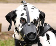 Everyday Leather dog muzzle for Dalmatian