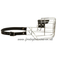 Basket Dalmatian Muzzle For Dogs So They Can Drink