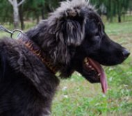 "Caucasian Shepherd Large Leather Dog Collar ""Flame"""