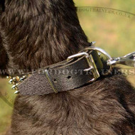 Designer Leather Dog Collars with Spikes and Studs