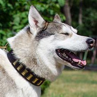 Dog Collar Designs for Husky Dogs | Designer Leather Dog Collars