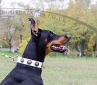 Doberman Collars UK New Dog Fashion ⓴⓮