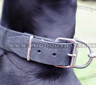Dog Collar with ID ▅ | Doberman Collars with ID Tag Plate