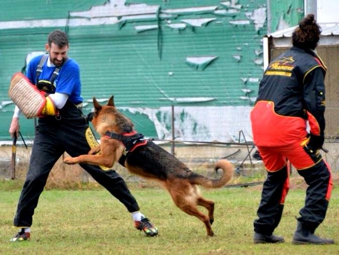 IGP Dog Training Padded Suit
