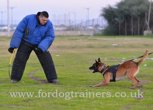 Dog training harness for Schutzhund
