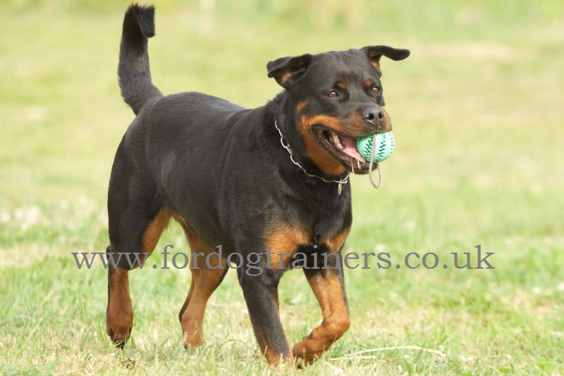 Rubber Dog Dental Care Ball