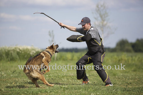 professional whip for dog training