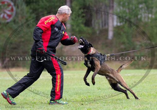 IPO protection suit for dog training