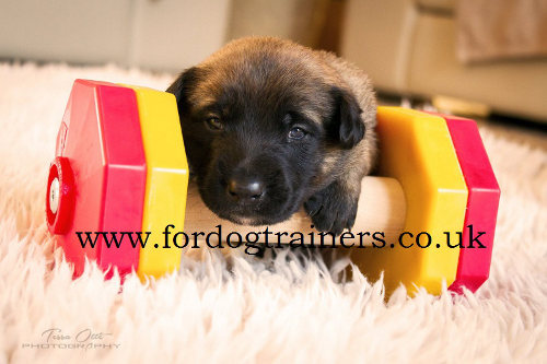 Dog Dumbbell for Schutzhund Training