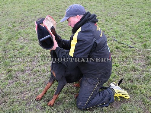 Doberman Dog Training with a Bite Sleeve