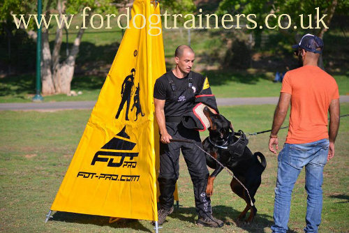 Schutzhund dog training sleeve for biting
