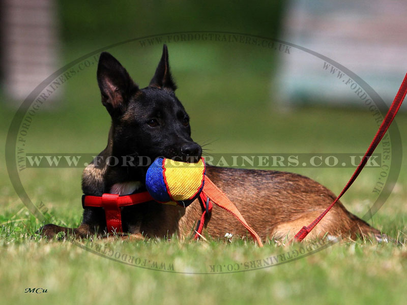Soft Dog Toy For Small Dogs