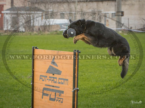 ipo dog training jump